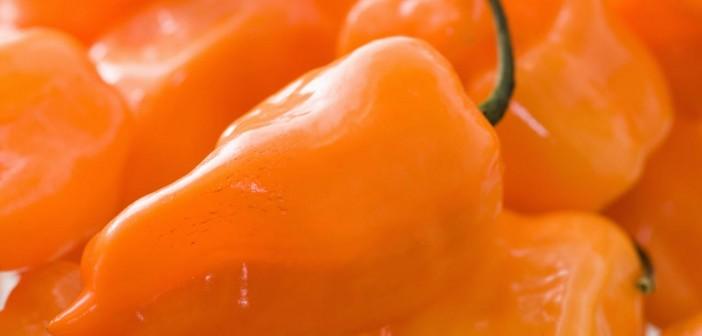 ハバネロ(オレンジ色)の写真