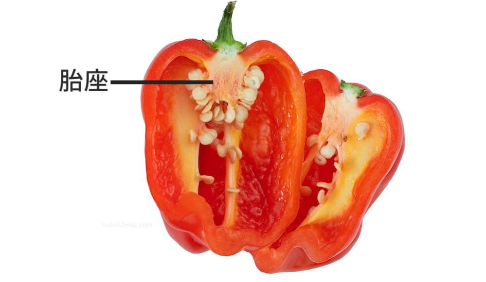 唐辛子(ハバネロ)の胎座